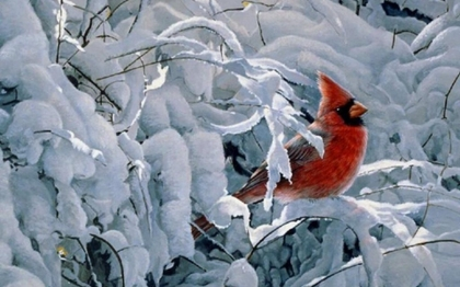 Image: Red Cardinal sitting on branches covered with ice and snow.